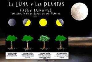 lunas plantas