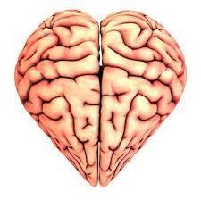 ciencia-corazon-cerebro